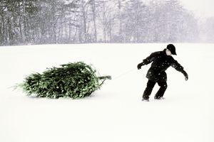 Boy Pulling Christmas Tree
