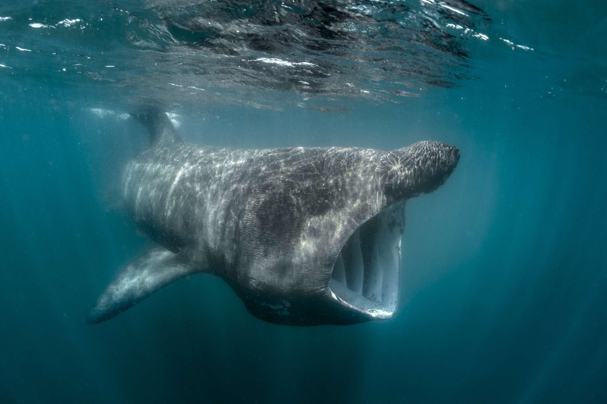 Worlds biggest fish
