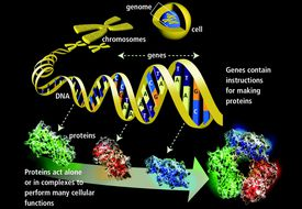 Genes and Proteins