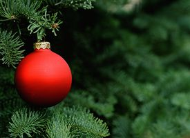 Christmas tree close-up.