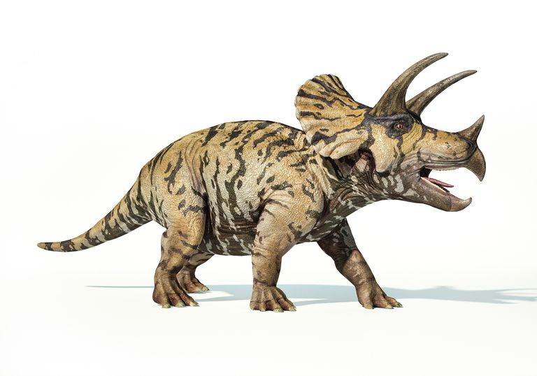 Triceratops dinosaur, illustration
