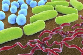 Shapes of Bacteria