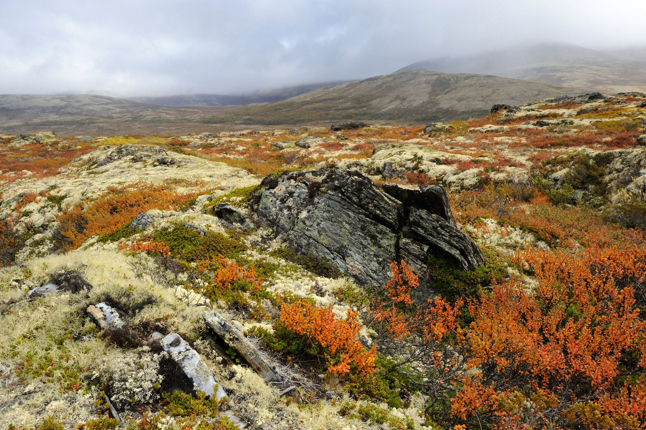 Autumn tundra landscape in Norway, Europe.