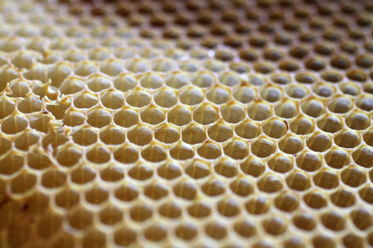 Honeycomb closeup.
