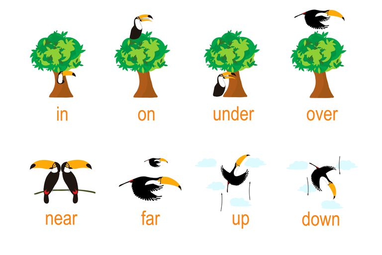 A cartoon toucan illustrates the prepositions in, on, under, over, near, far, up, and down