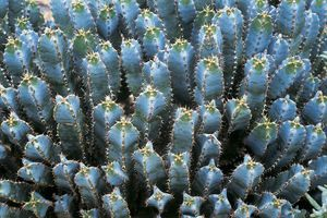 view of cactus-like plant from above