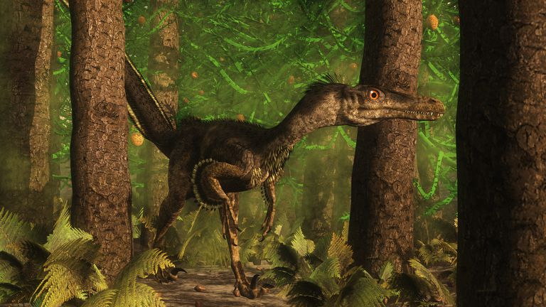 Velociraptor moving through the forest.