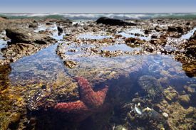 A Tide Pool Along the Coast of Southern California Is Home to Starfish, Mussels, Sea Anemones, and Much More