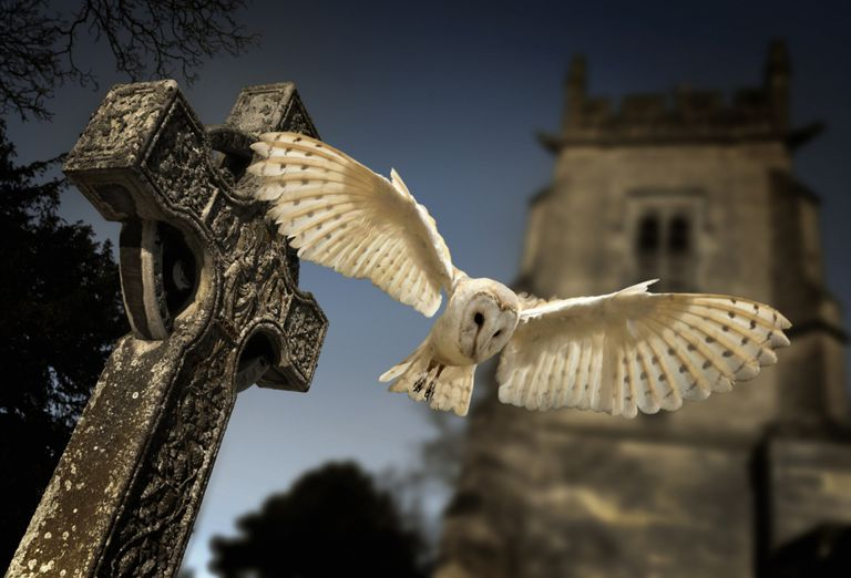 Owl flying over a gravestone