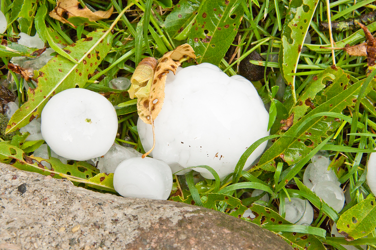 Large hailstones amongst grass and leaves.
