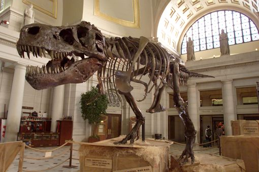 The Tyrannosaurus Rex skeleton known as Sue stands on display at Union Station in Washington D.C.