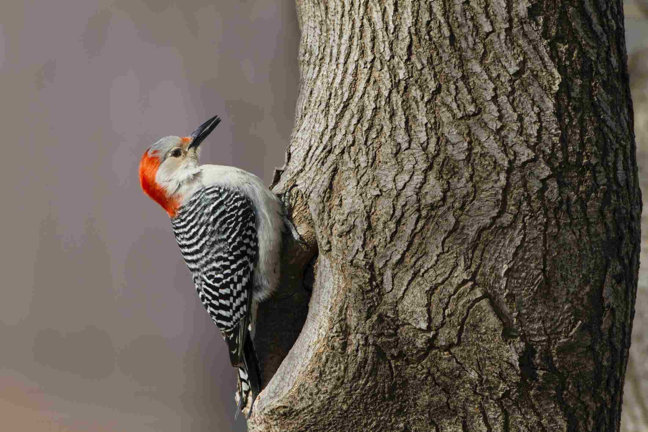 Woodpecker perched on a tree