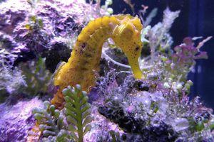 Seahorse Printables