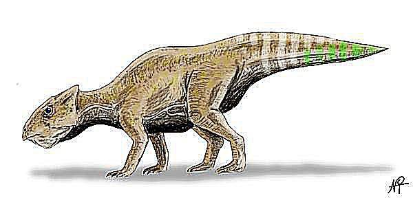 yamaceratops