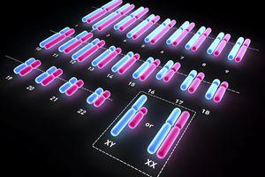 Human Karyotype graphic