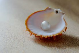 Pearl sitting in a shell on a sandy beach close up.