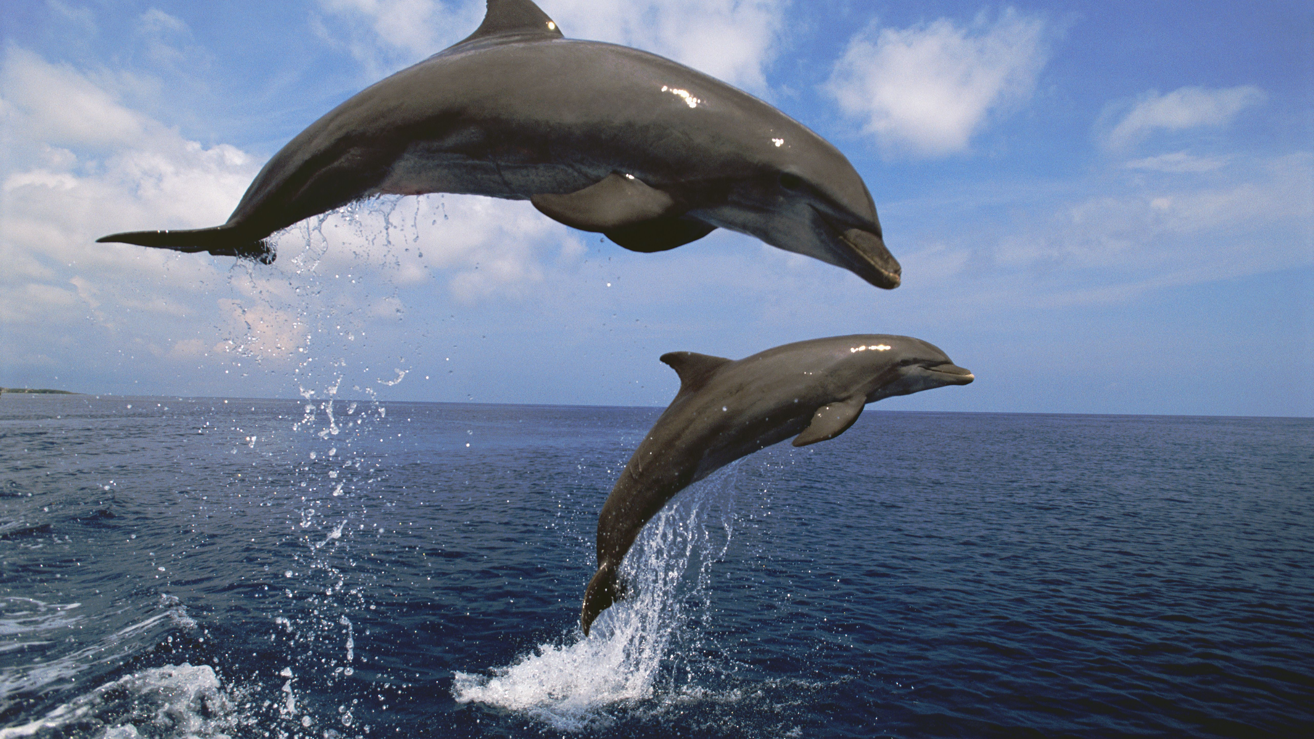 what is a bottlenose dolphin diet
