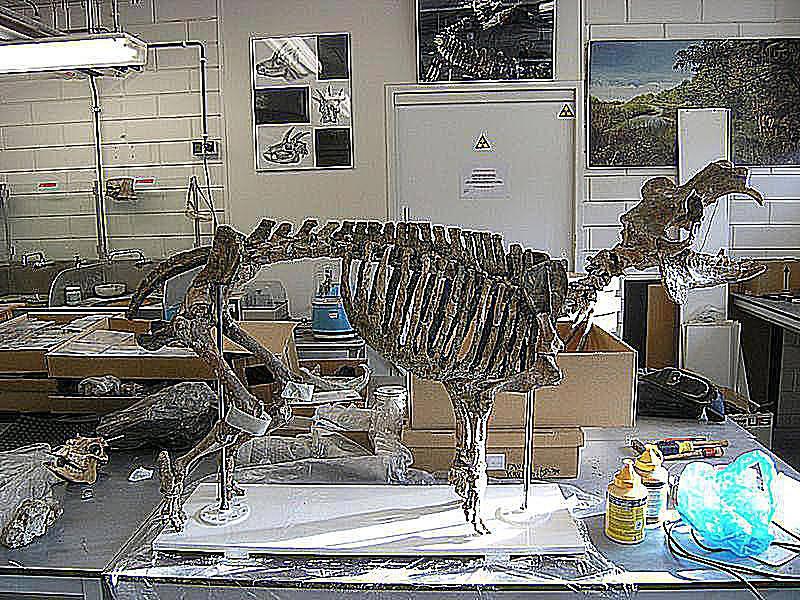 cyprus dwarf hippopotamus