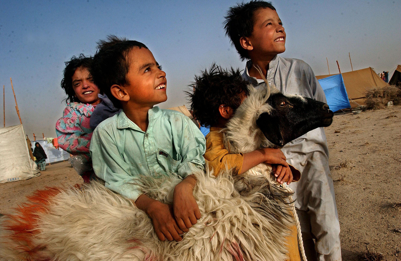 children hugging sheep