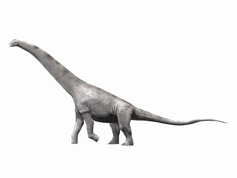 Alamosaurus sanjuanensis, a sauropod from the Late Cretaceous of New Mexico, USA.