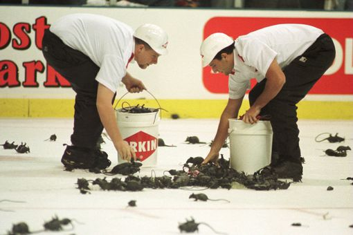 Florida Panthers fans throwing rats on ice