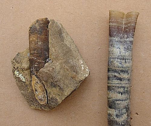 Explore Fossils in a Photo Picture Gallery