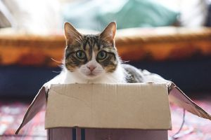 Cat playing with boxes and toys
