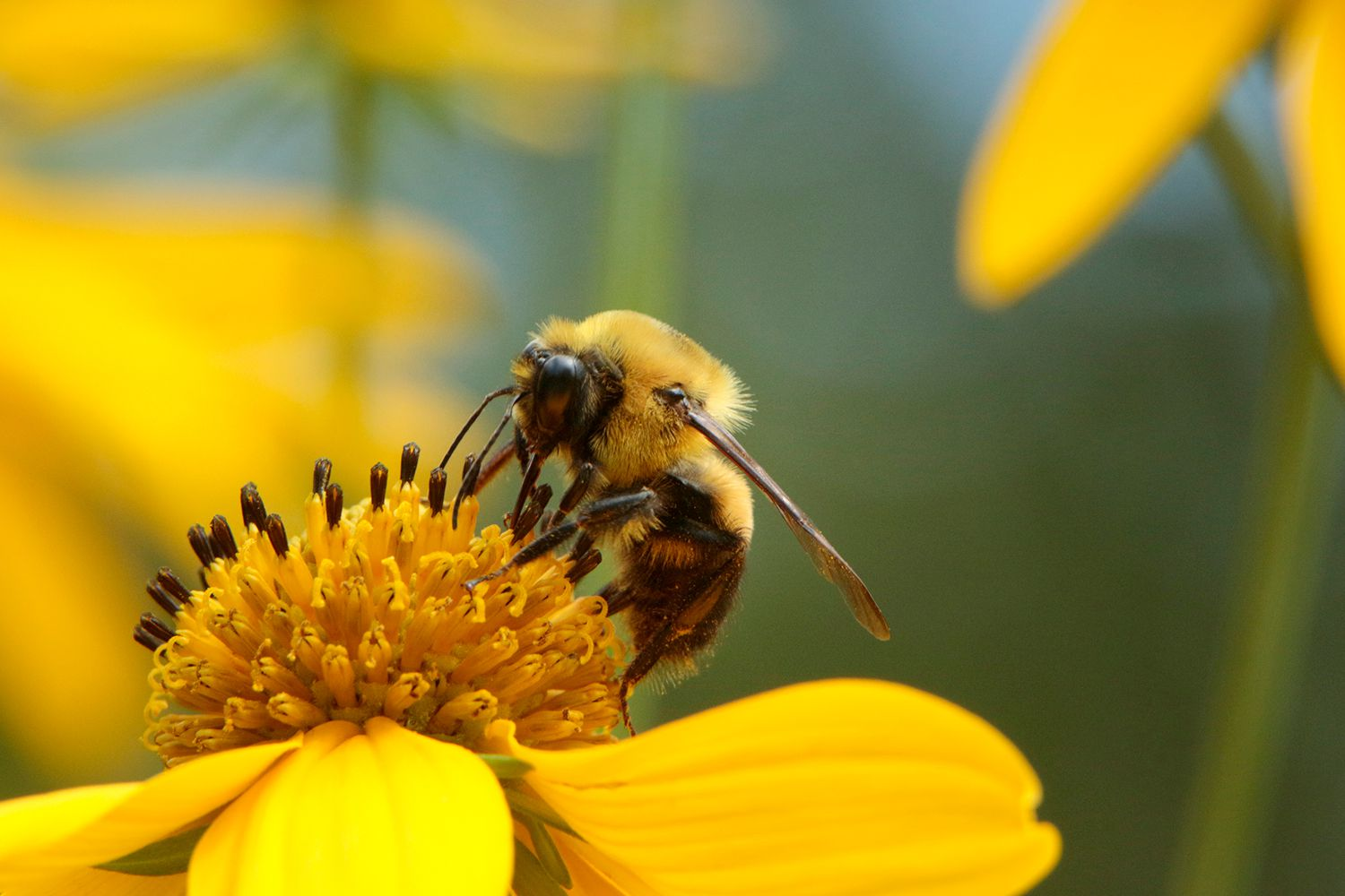 12 Ways To Help Native Bees