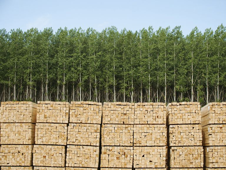 Usa, Oregon, Boardman, Orderly Stacks of Timber in Timber Plantation