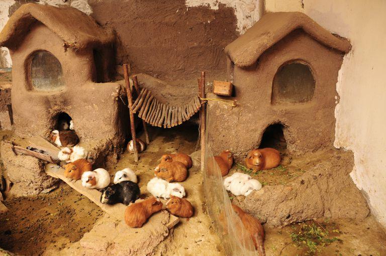 Guinea Pig House in Peru