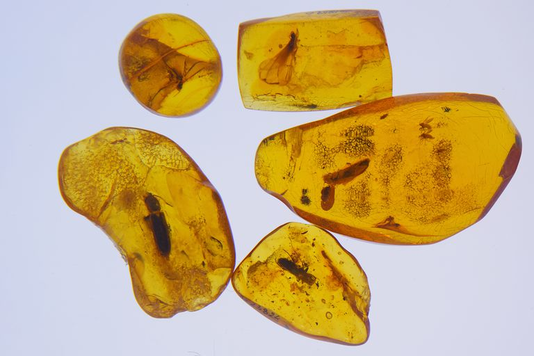 56c7e0393f4 Baltic Amber: 5,000 Years of International Trade