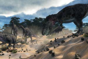 Tarbosaurus surprising a herd of Saurolophus dinosaurs outside of a cedar forest.