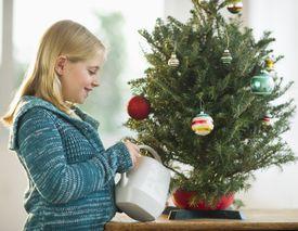 USA, New Jersey, Jersey City, Girl watering christmas tree