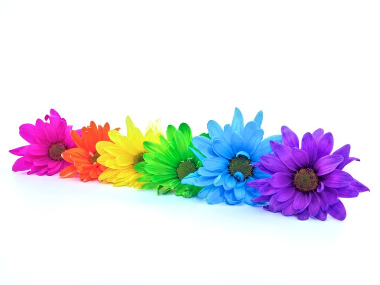 Rainbow Daisies: White daisies are especially easy to color using science.