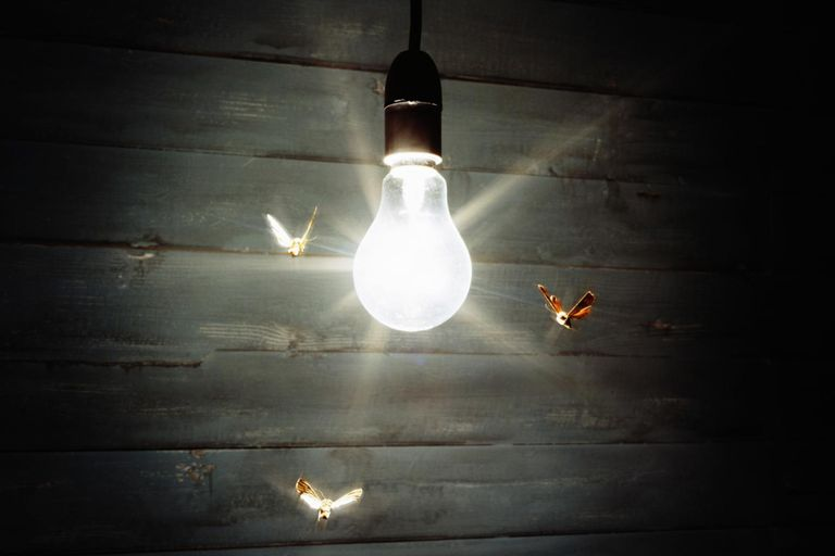 Three moths flying around illuminated light bulb.