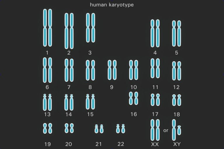 This Human Karyotype Shows The Complete Set Of Chromosomes Each Chromosome Pair Represents A Homologous In Diploid Cell