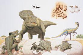 Protoceratops Family
