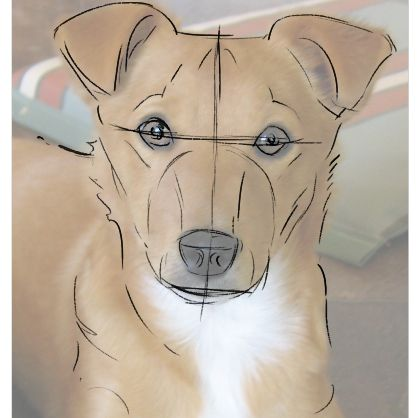 How To Draw A Dog From A Photograph