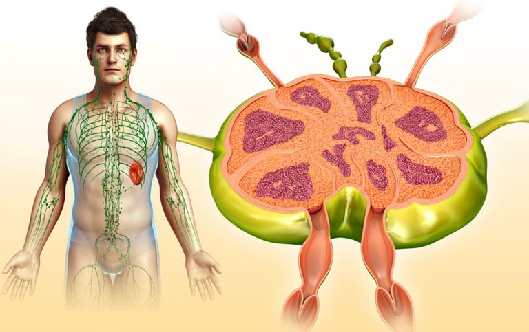 illustration of lymph nodes and lymphatic system