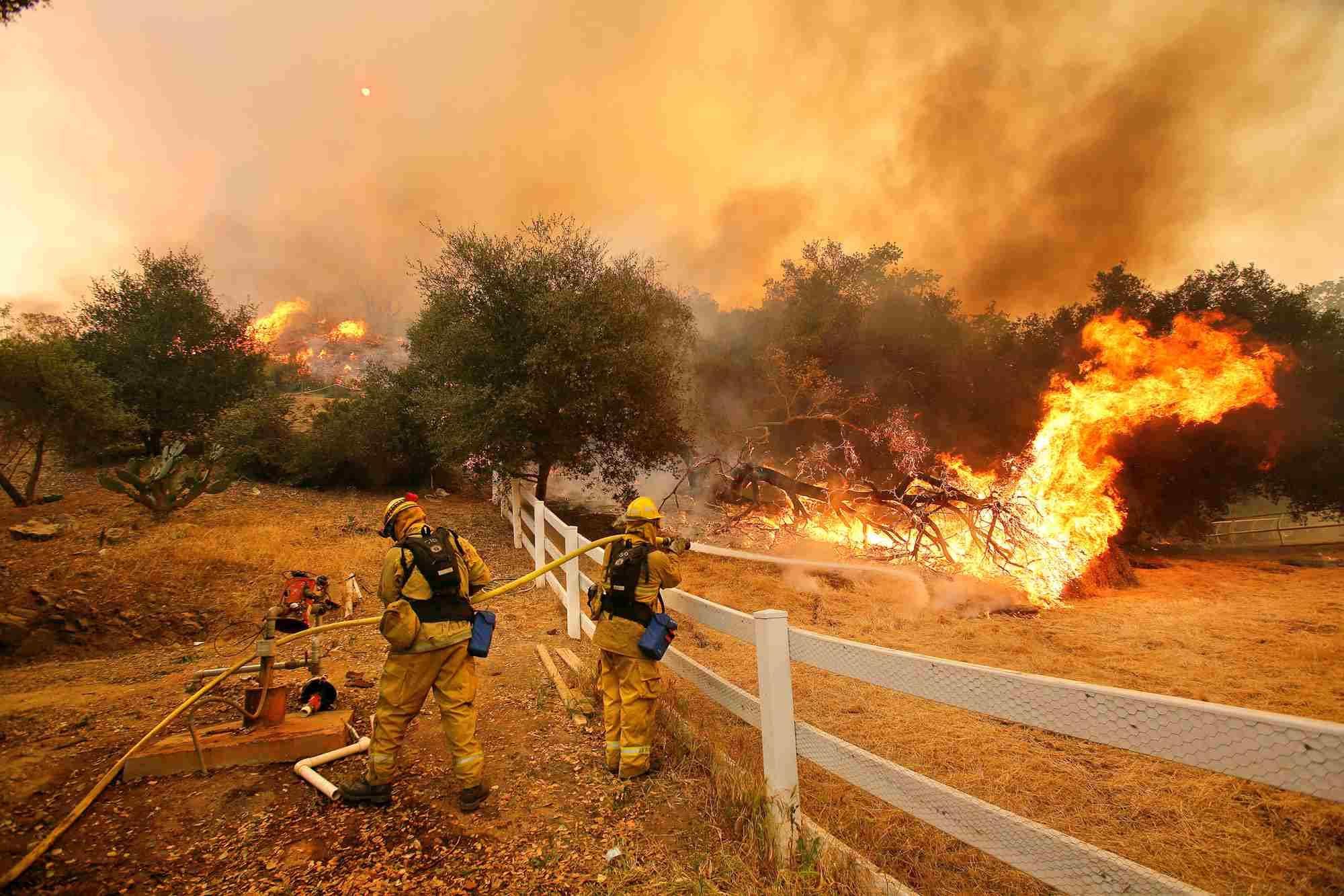 árboles ardiendo en un incendio forestal