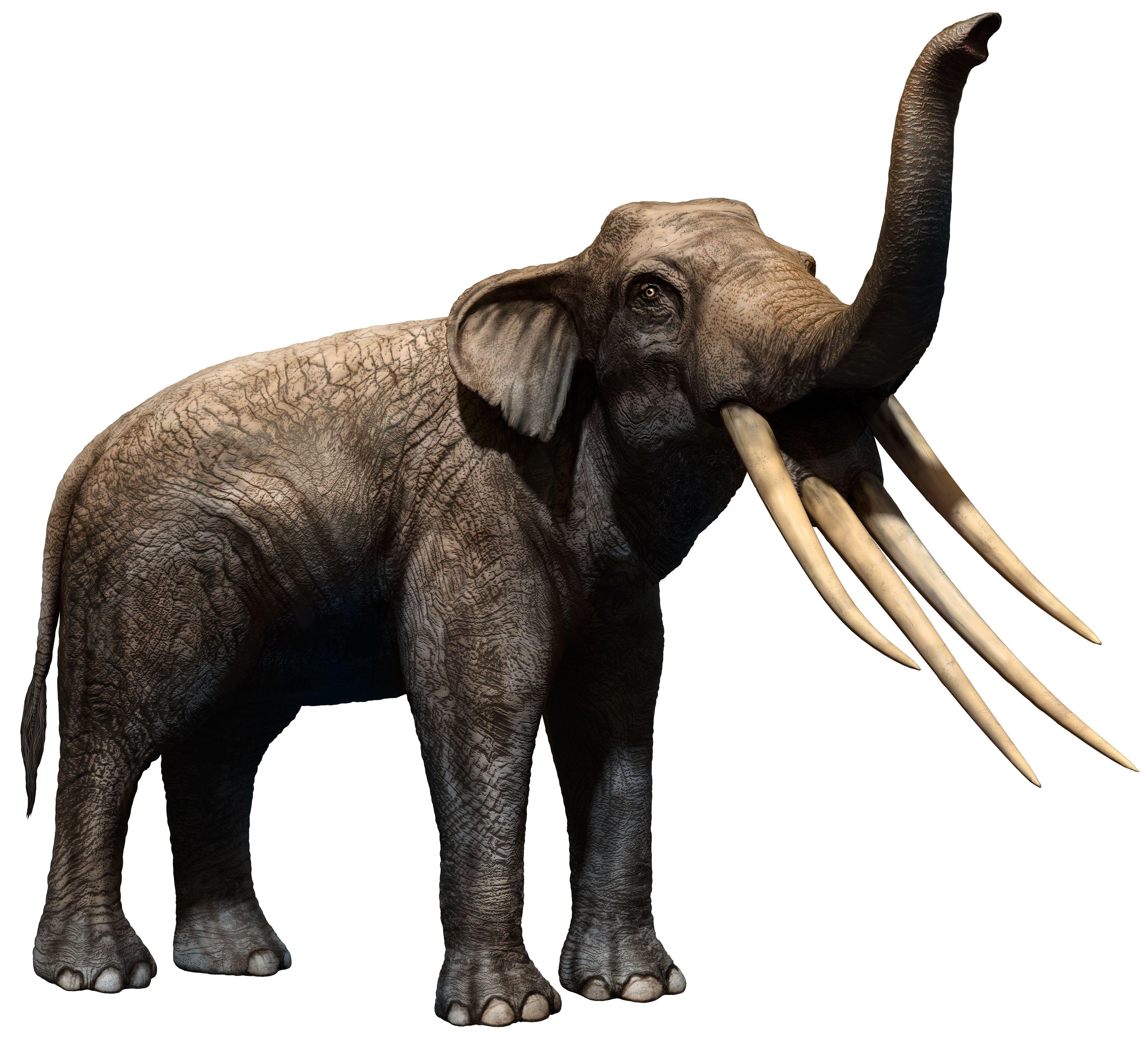 Stegotetrabelodon