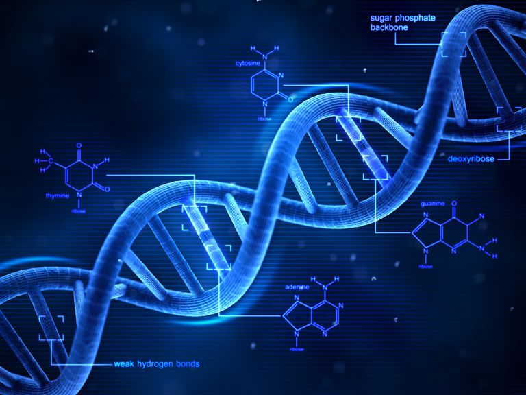 In DNA, there are four nucleotides: adenine, thymine, guanine, and cytosine. Uracil replaces thymine in RNA.