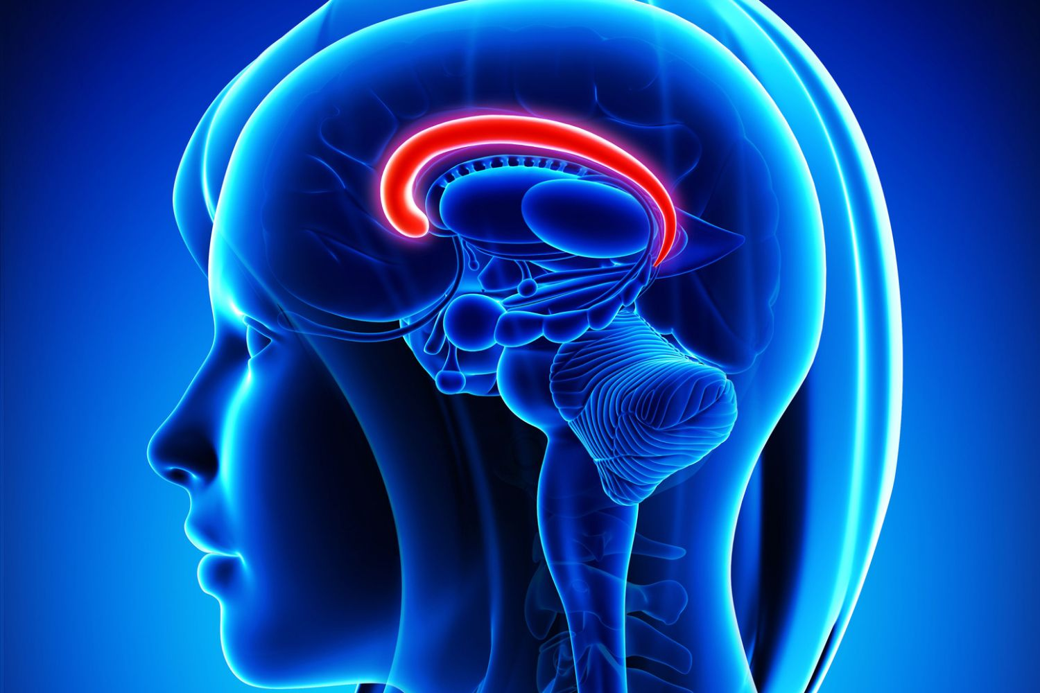What Is the Cingulate Gyrus?
