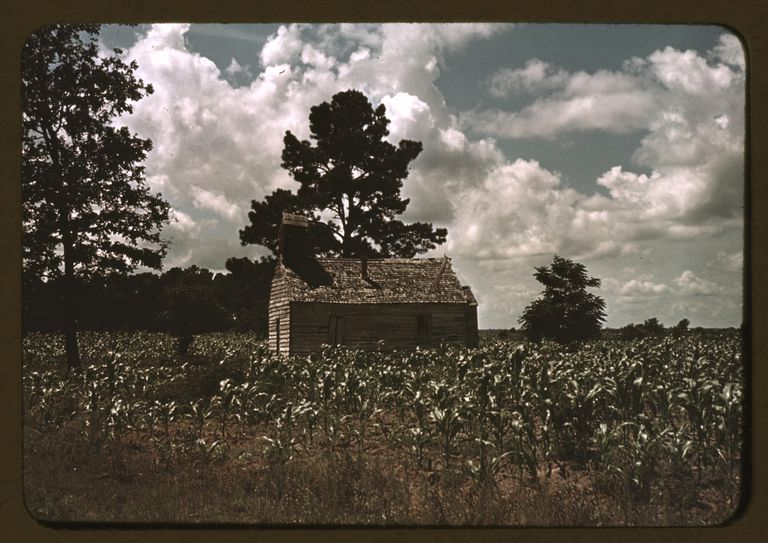 A Black Church In A Corn Field