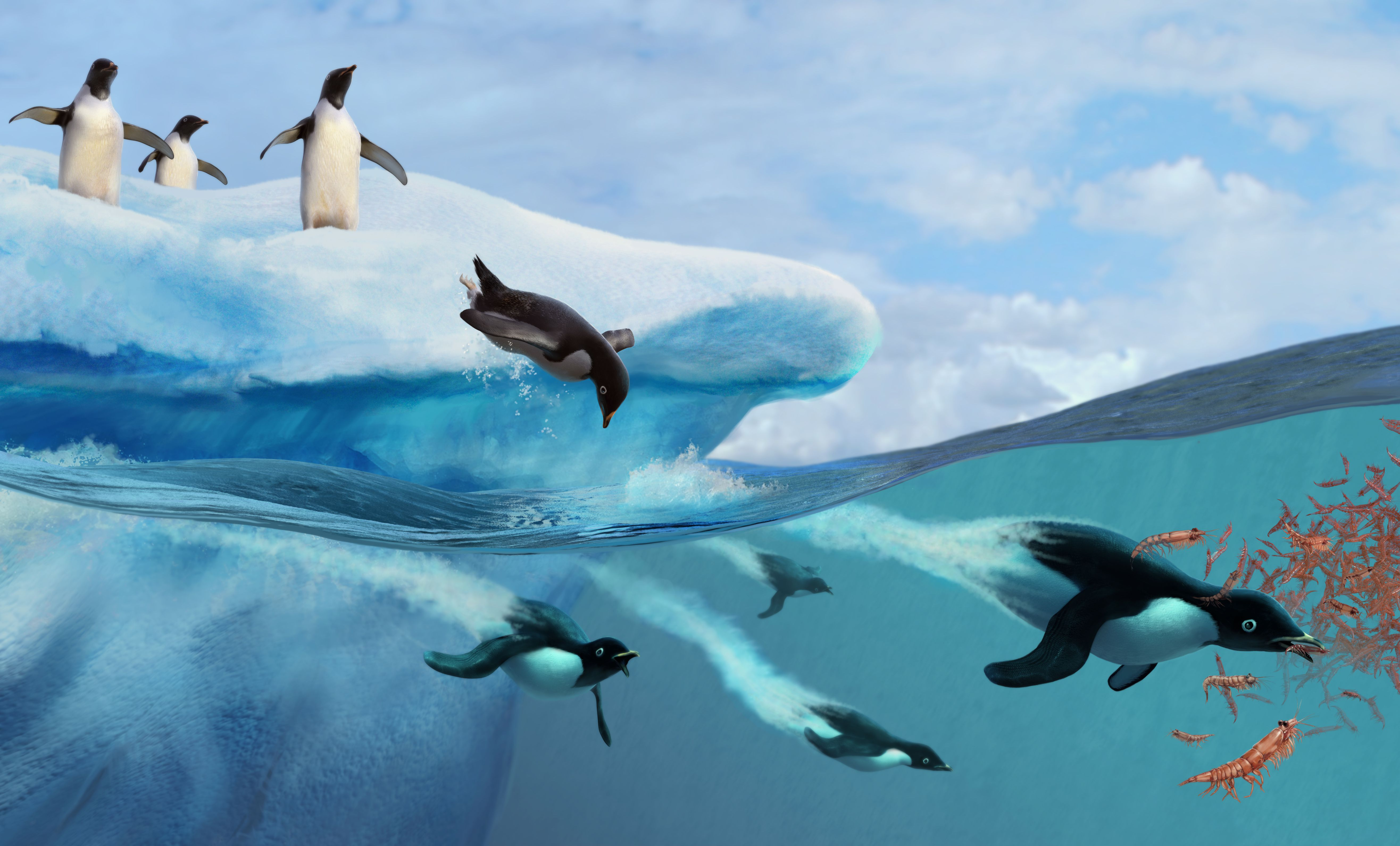 Digital Illustration Of Arctic Penguins On Ice And Diving Underwater For Krill F Bd B F D F F moreover Px D D B D D Bb D Be D Bd D Be D B D B D B D D B D Ba D Be D Be D B D D B D B D Bd D B D B D D B D B D Bd D B D D B D B D B D Be D B moreover Copepod Zooplankton together with Dscf together with Frog Pond Jupiter. on zooplankton food chain