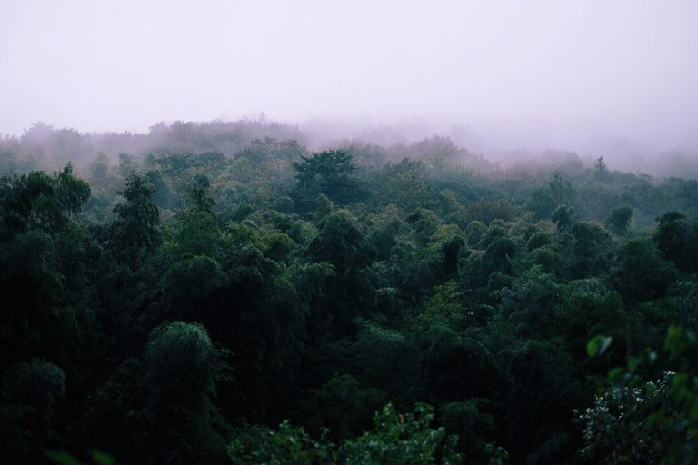 Scenic View Of Forest During Rain