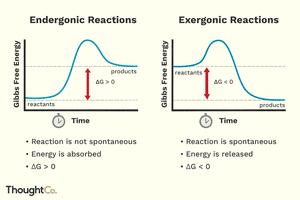 Endergonic vs. exergonic reactions