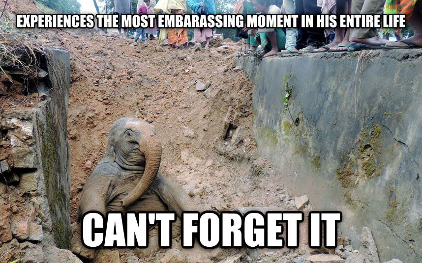 Elephant Good Luck Quote: The 20 Funniest Animal Memes