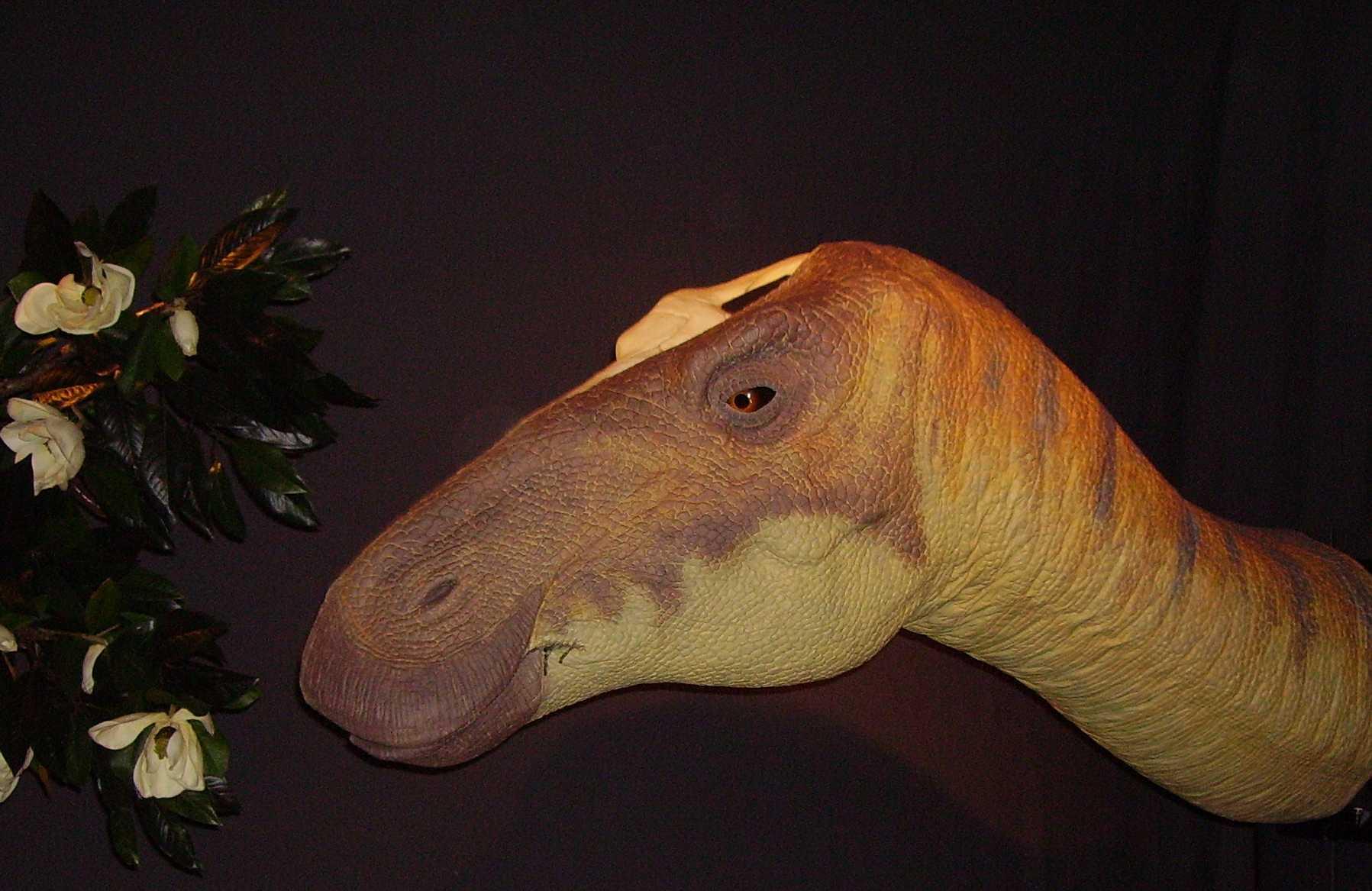 The 10 Strangest Dinosaur Names