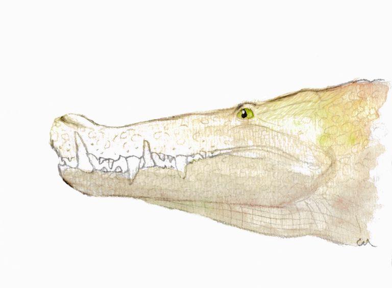 kaprosuchus boarcroc